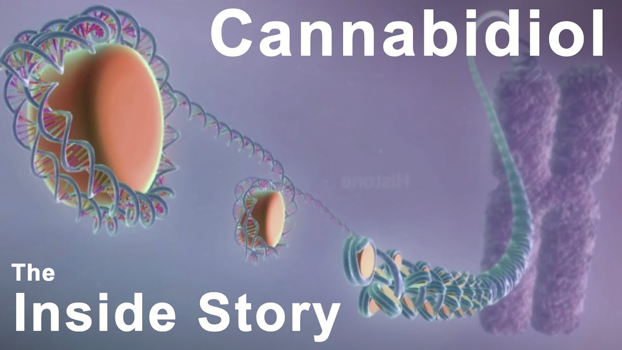 The Inside Story of Cannabidiol – What are the Benefits of CBD?