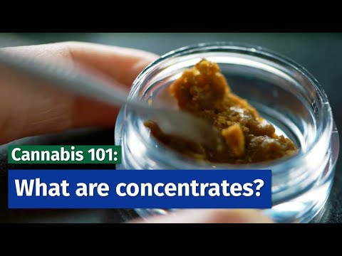 What Are Concentrates: Cannabis 101