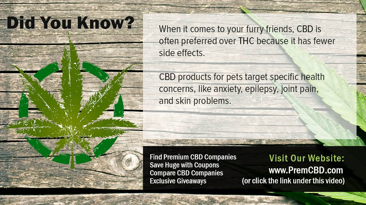 Can You Bring CBD Oil On A Plane Benefits of CBD