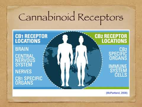 Health Benefits of CBD: Learn about Your Endocannabinoid System