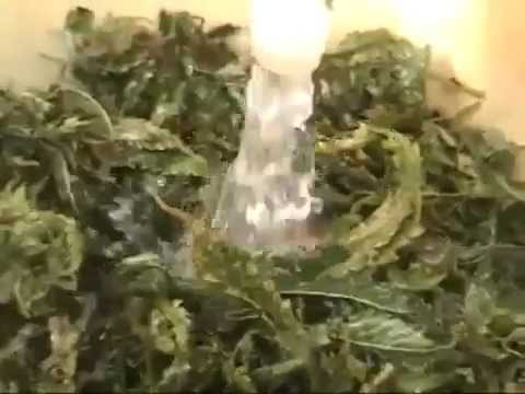 How to make medicinal cannabis oil. (Cannabis oil cures cancer. SEE more at cureyourowncancer.org)